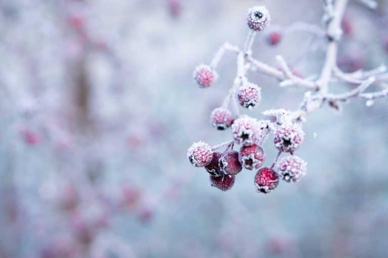 Fun Winter Wreaths For 2020