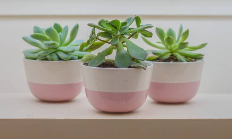 Everything You Need to Know About Choosing and Caring for a Ceramic Planter