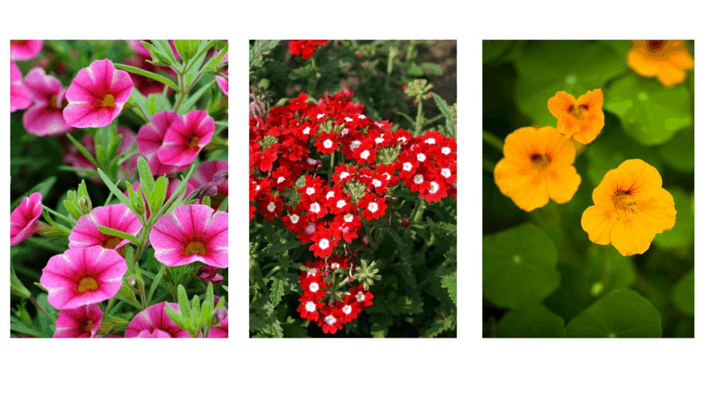 wishing well planter flowers